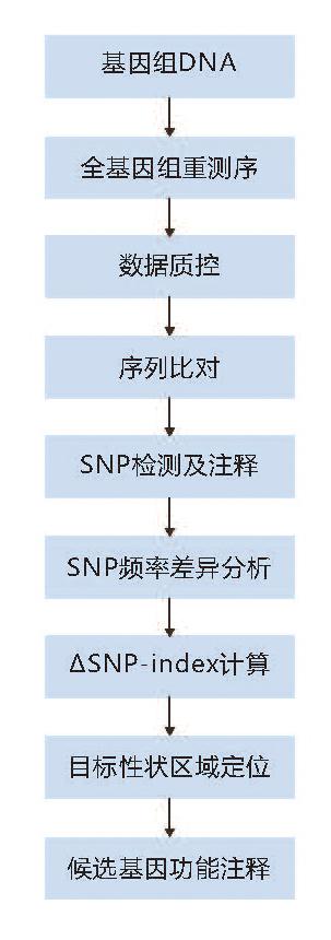 BSA性状定位技术路线.jpg