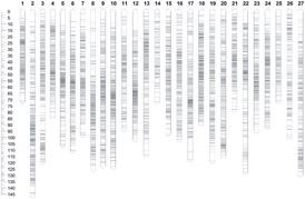 遗传图谱构建分析结果.jpg