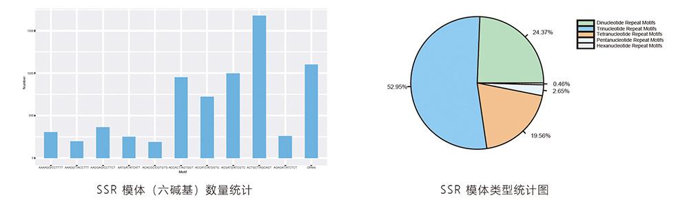 SSR分子标记开发分析结果.jpg