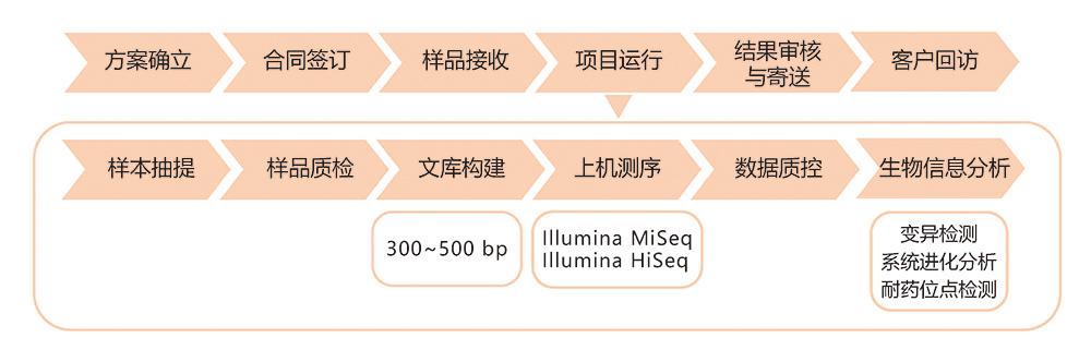 细菌国际重测序技术路线.jpg