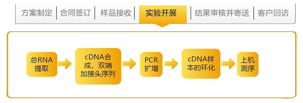 全长转录组测序技术路线.jpg