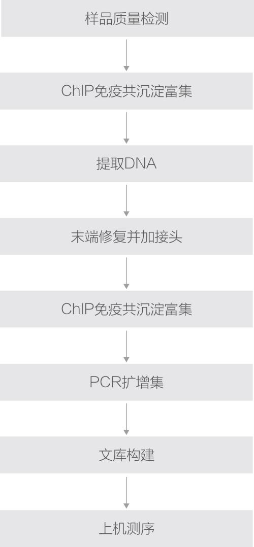 ChIP技术路线.jpg